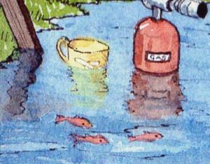 contented goldfish